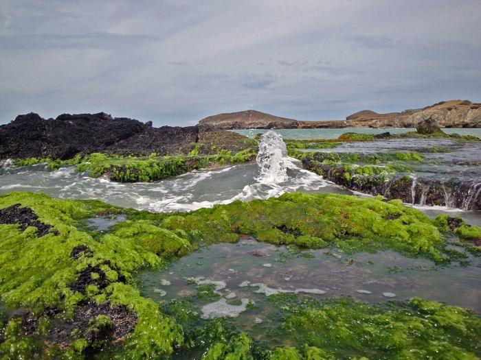 Green algae on the rocks at Cabo de la Vela. Guajira, Colombia