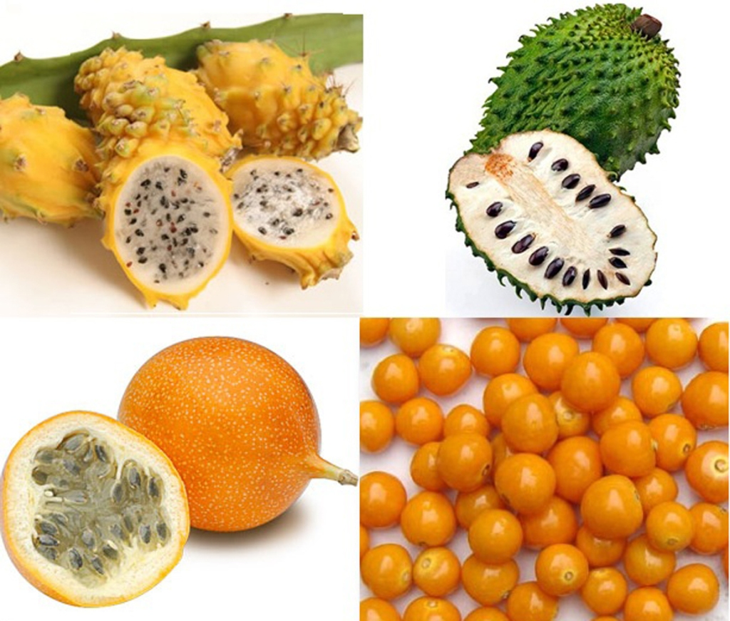 Clockwise from top left: pitaya, guanabana, uchuva, granadilla (Images from public domain)