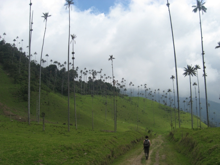 Cocora Valley - Colombia. Image copyright Ariel Dombroski