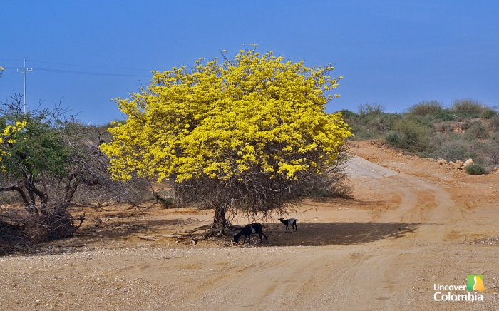 On the road - La Guajira, Colombia