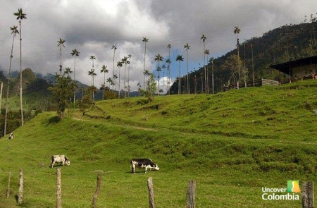 Valle de Cocora in the Coffee Region