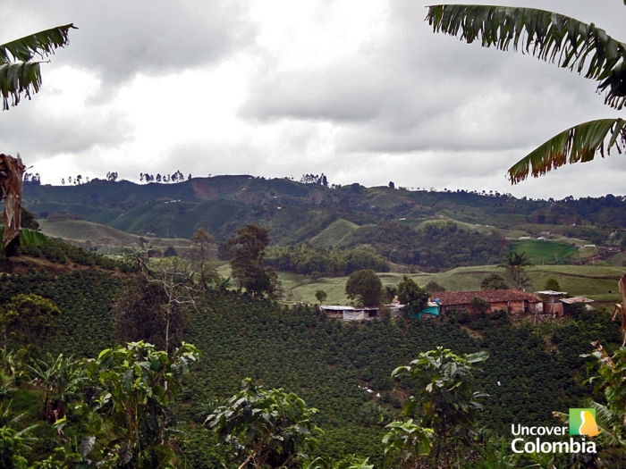 The Coffee triangle, Colombia