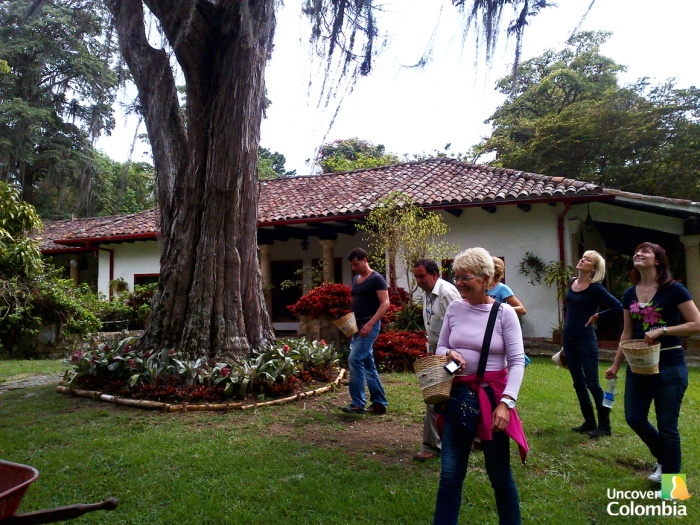 Hacienda Coloma - Getting ready to start picking coffee beans