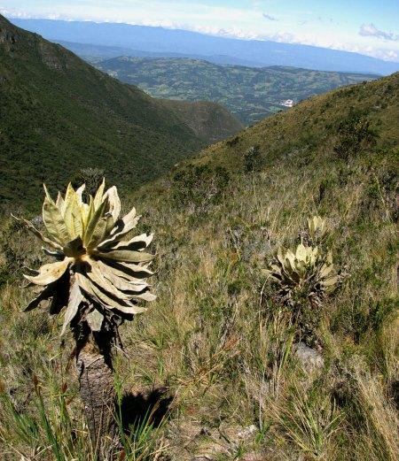 Iguaque Natural Park
