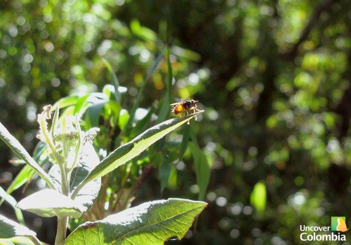 Iguaque - Fly
