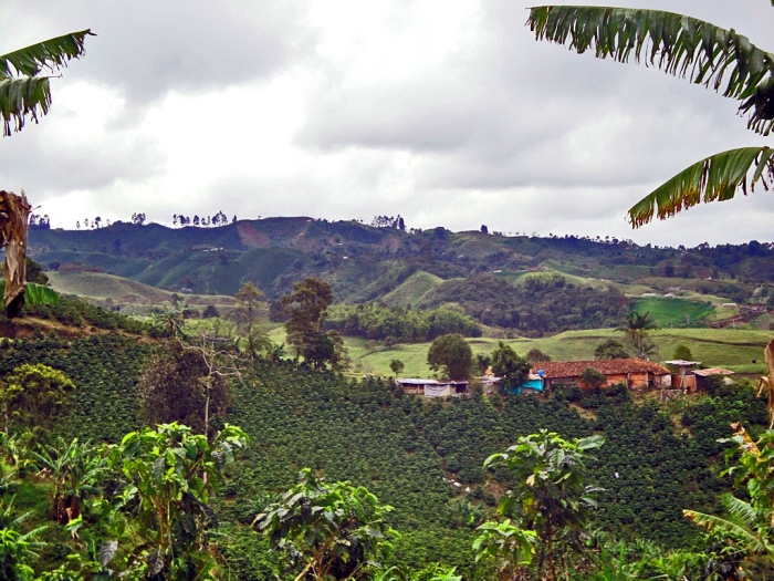 Colombia - Diversity of landscape - Coffee Region