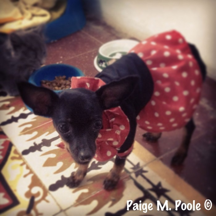 A dog dressed up as la Negrita Puloy
