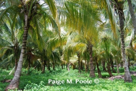 Coconut forest in <strong>Tayrona National Natural Park</strong>