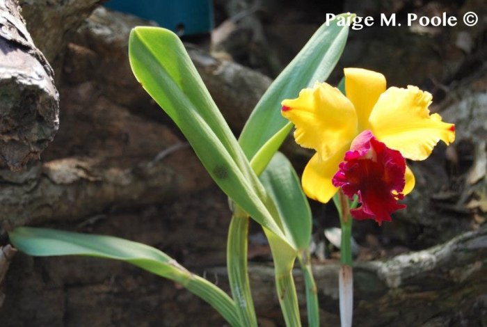 Orchid in Medellín