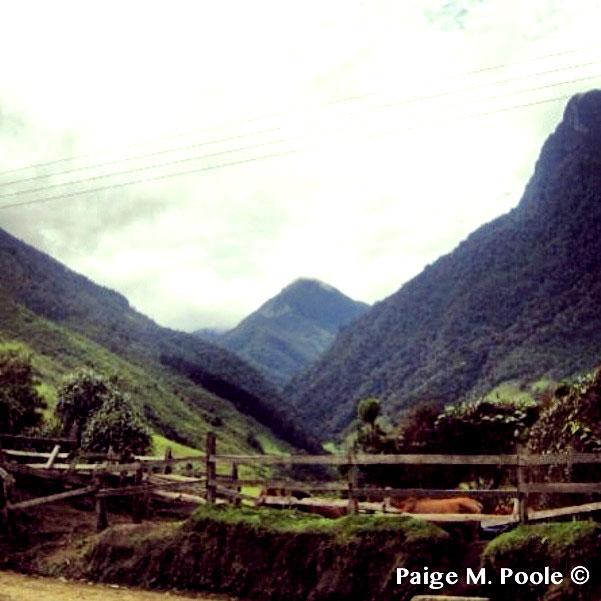 View from el Valle de Cocora