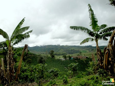 Coffee Region, Salento, Colombia