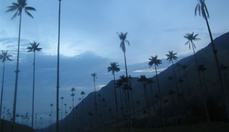 Valle de Cocora in the Zona Cafetera - Scuba-diving at Taganga, near Santa Marta - Copyright soulsofmyshoes.wordpress.com.