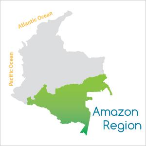 The Amazon Region