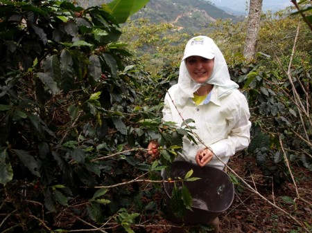 Coffee picking is real tough job