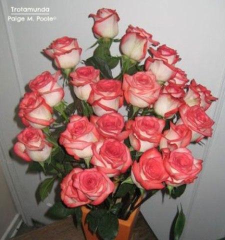 Roses in Bogota