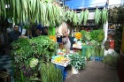 An intoxicating fusion of fresh aromatic and medicinal herbs