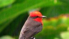 Colombia Birding Tour