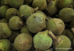 Zapotes are easily found in most markets and cost about 25 pence each